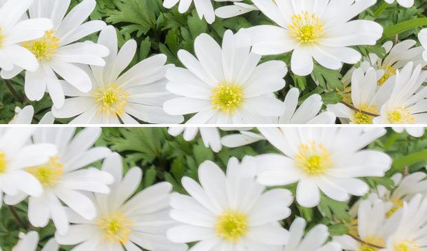 Blumen verwackelt und nicht verwackelt mit Bildstabilisator